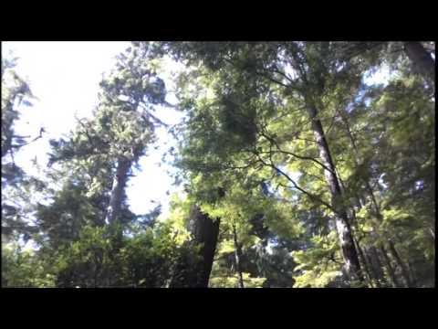 Third Eye Land - Apes Sought