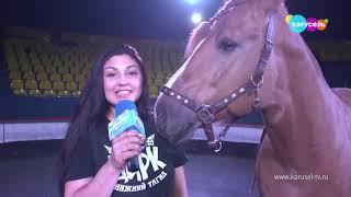 Таланты циркового коня, Программа «Навигатор телеканала «Карусель»