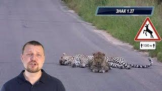ПДД 2018 Дорожные знаки - Предупреждающие