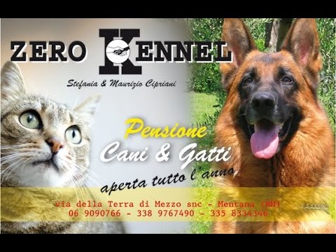 Zero kennel residence cani e gatti youtube for Youtube cani e gatti
