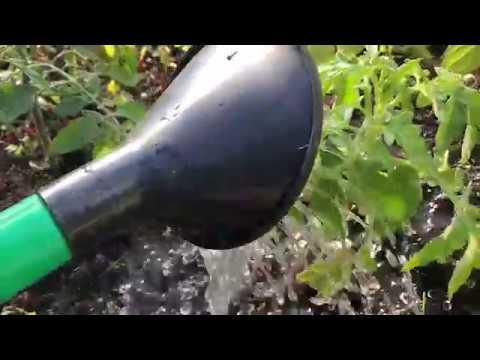 Växthus och semester 3 knep som räddar växterna