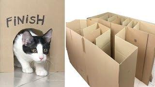 Laberinto gigante para mis gatitos bebés Luna y Estrella / Funny cats