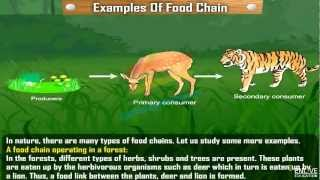 Examples of food chain