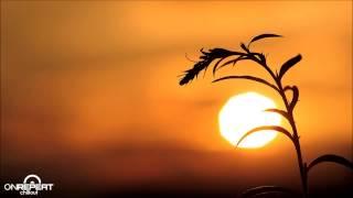 Bryan Milton | Sunny Day