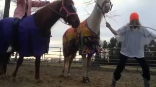 Harlem Shaking- Horse Style