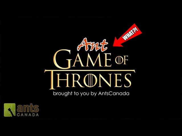 ant-game-of-thrones