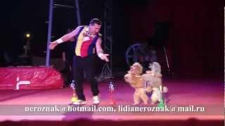Circus Poodles