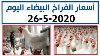 سعر الفراخ البيضاء اليوم الثلاثاء 26-5-2020 في بورصة الدواجن في مصر