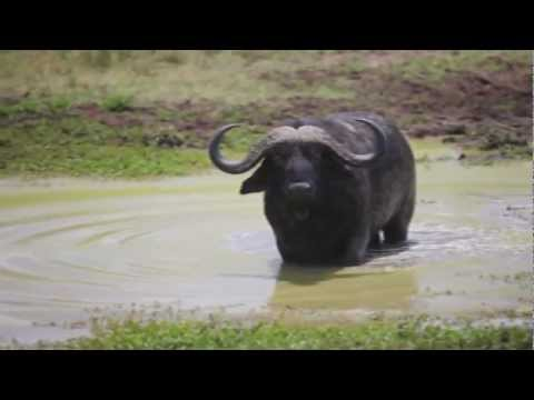 Coldplay - Paradise (Peponi) African Style