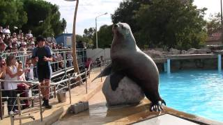 Marineland Antibes: Steller Sea Lions