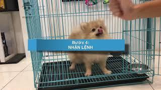 Cách huấn luyện chó cơ bản (#8) Dạy cún VÀO CHUỒNG   Cнi tiết   BossDog