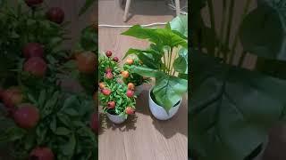 pot bunga dan pohon buah imut, bagus buat di kamar aesthetic