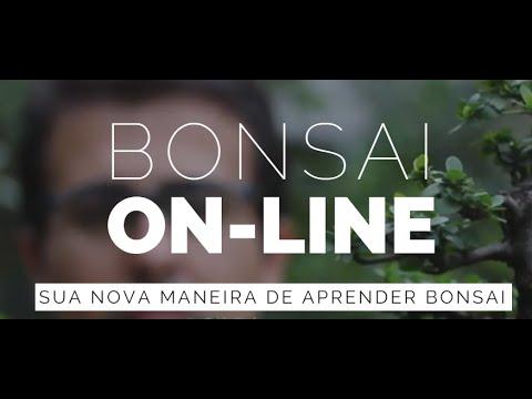 Apresentacao Do Canal Bonsai On Line Youtube