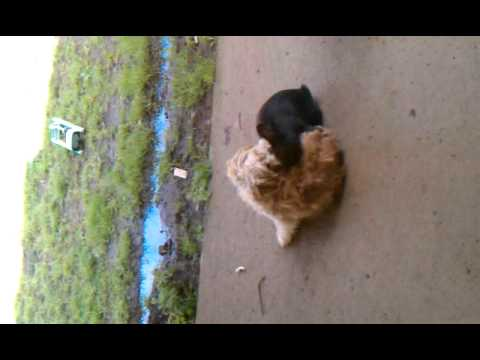 dog-and-rabbit-mating