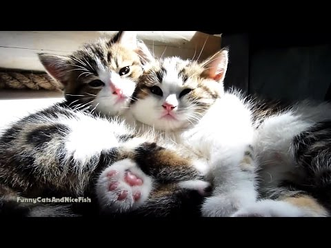Just Too  Cute Kittens video