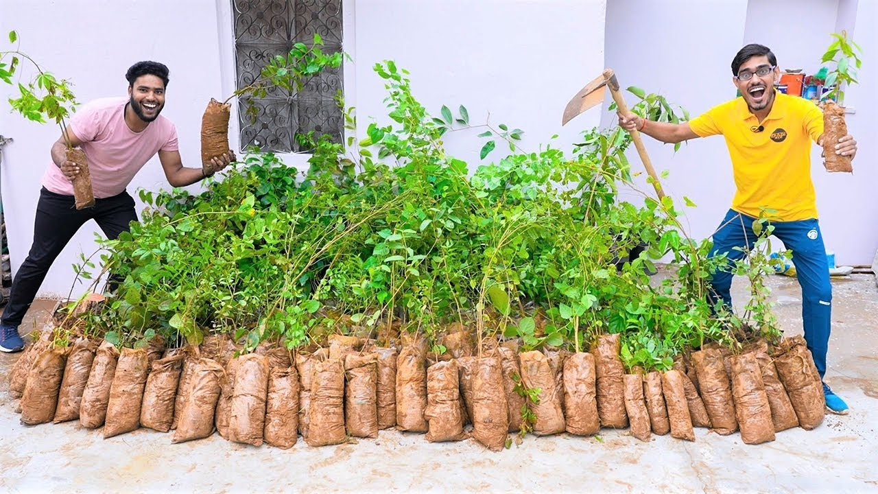 How to Plant 1000 Trees To Save Earth