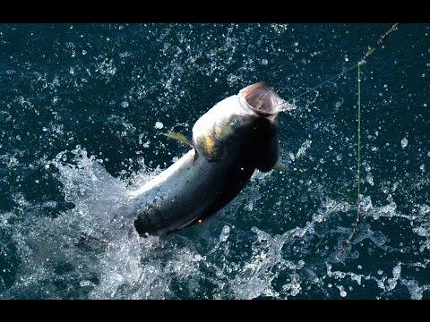 Fish Finder TV - Perth Salmon Run 2015 - Australian Salmon Fishing