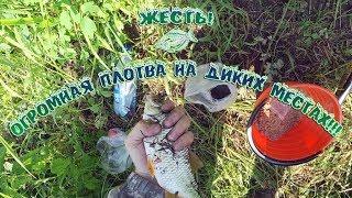Жесть Огромная плотва на диких местах Поселок Подтесово. Река Чермянка.