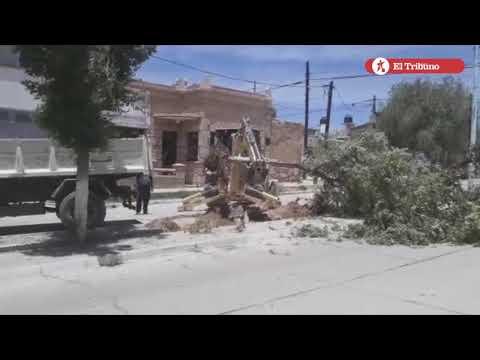 Tala indiscriminada de árboles en La Quiaca
