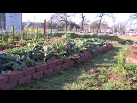 UH Campus Community Garden an 'oasis'