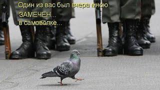 23 ФЕВРАЛЯ С ЮМОРОМ - С ДНЕМ ЗАЩИТНИКА ОТЕЧЕСТВА!