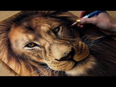 drawing-a-lion