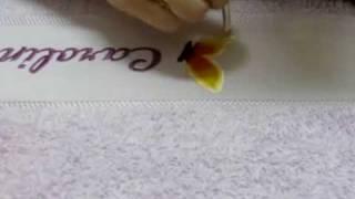 Pintura em Tecido com stêncil Borboleta