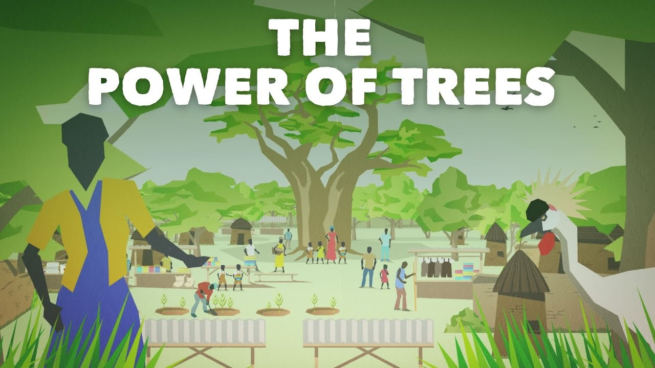 The power of trees in Africa
