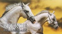 Candy und die Rivalinnen der Rennbahn (Familienfilm mit Pferden kostenlos in deutsch volle Länge)