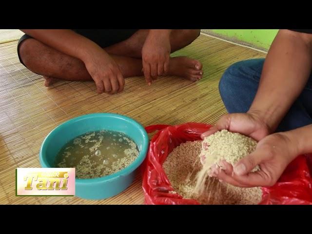 Habar Tani Episode 1 - Pembuatan Tricoderma untuk Tanaman Bawang Segmen 2 #TV Tabalong