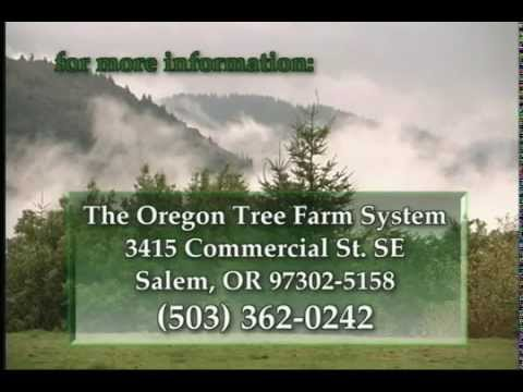 Forest Management & The Oregon Tree Farm System