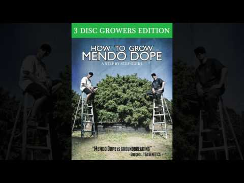 How To Grow Mendo Dope Trailer Alfalfa Seed Sprouts