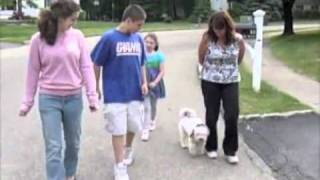 Vicious Dog Attempts Hostile Take Over Of Family - Jeffrey Loy : Dog Training