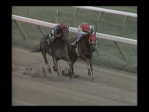 Saratoga - 8-15-1994 : Full Race Card