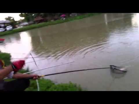 หลิว ทับทิม ไซด์งาม  ที่บ่อตกปลาวิทูรย์ฟาร์ม