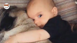 Ekim Ayının En Eğlenceli Köpek ve Bebek Videoları 👶 Komik Bebekler 2018