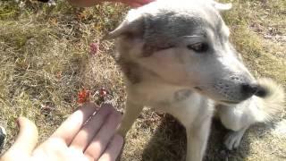 実家に帰ったら犬がなついてました。超かわいい.