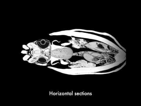 MRI and CT Imaging of Mollusks on YouTube