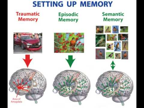 How the Brain Works: Conscious Memory, Video 10 of 20 - YouTube