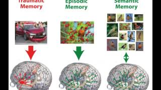 How the brain works: conscious memory, video 10 of 20