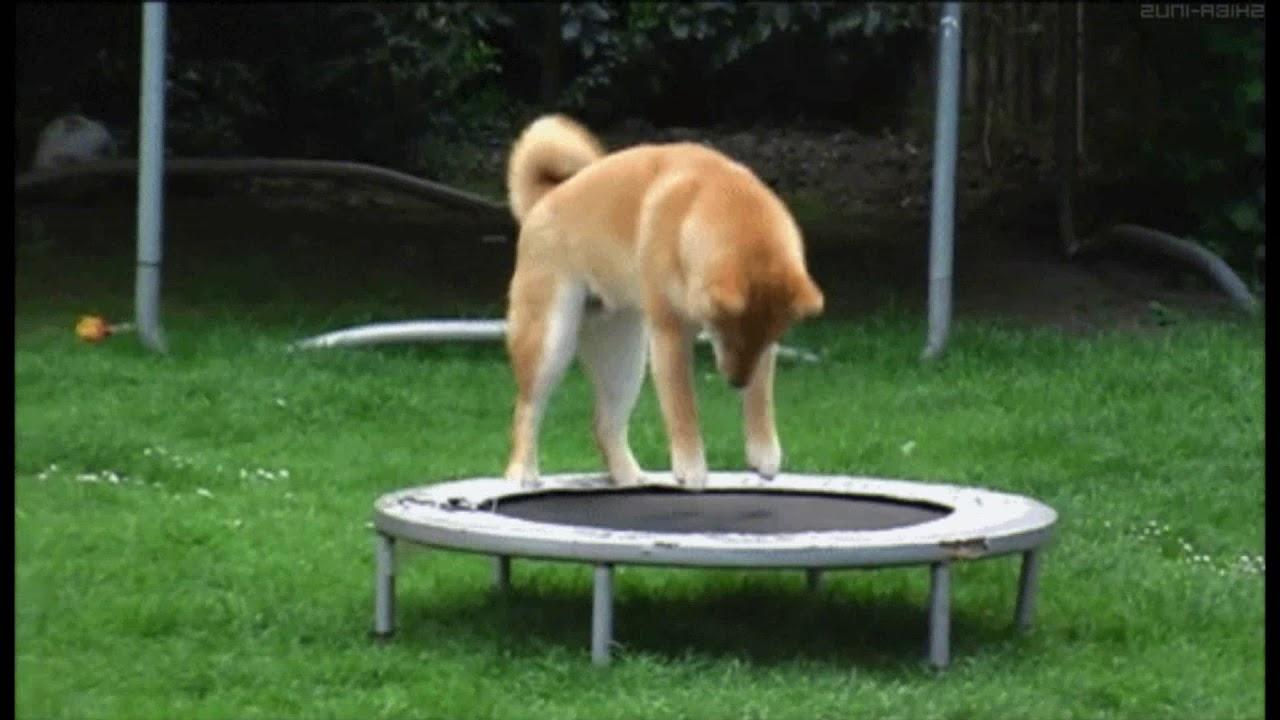 Прыгающая собачка гифка, открытки