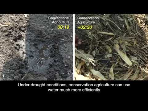 Conservation agriculture for efficient water use