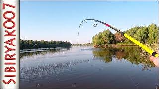 А это точно полосатый!?.. Ловлю окуня на резину Jackall. Рыбалка на спиннинг летом.