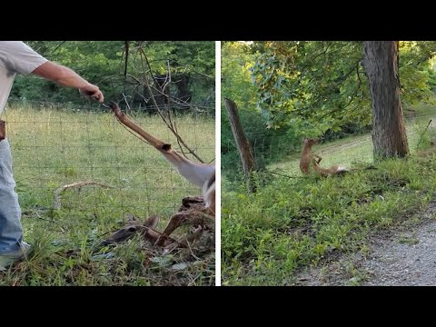 Deer Fence Rescue Fail