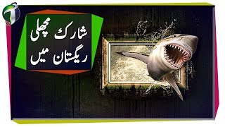 Habitats: Finding Shark in Desert Urdu Hindi