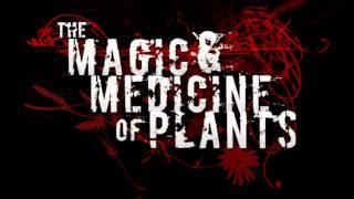 Magic Plants - 8BITBUMP [2012] (HQ)