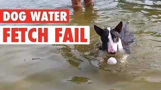 Dog's Water Fetch Fail