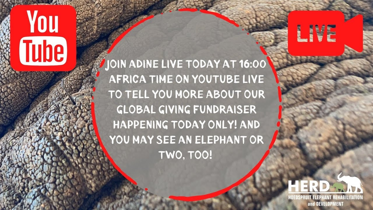 JOIN ADINE LIVE FROM THE RESERVE TODAY at 16:00 Africa time