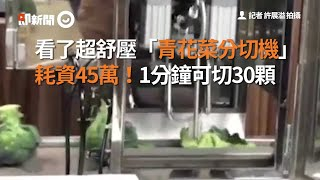 看了超舒壓「青花菜分切機」 耗資45萬!1分鐘可切30顆