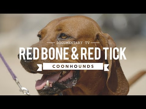 ALL ABOUT REDBONE & REDTICK COONHOUNDS
